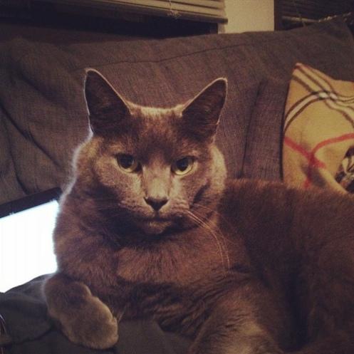 Cleo i grå sofa