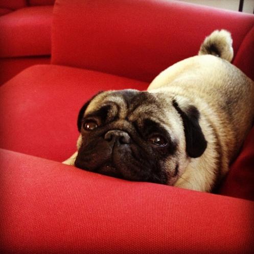 Oscar i sofaen