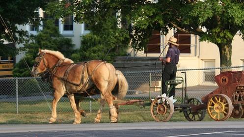 Amishmann med hest