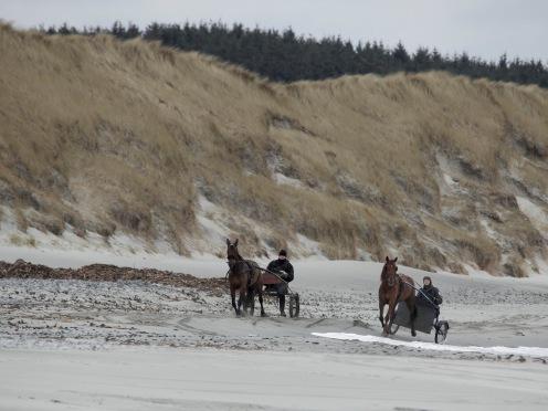 hest på strand