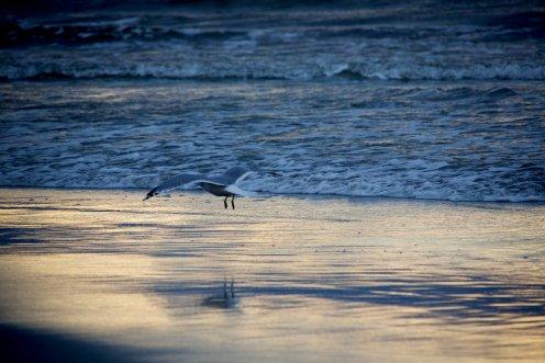 måke på strand