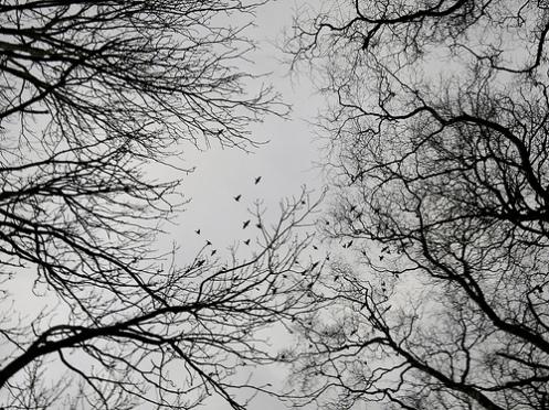 trekroner og fuglar 2