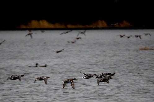 Ender i Frøylandsvatnet