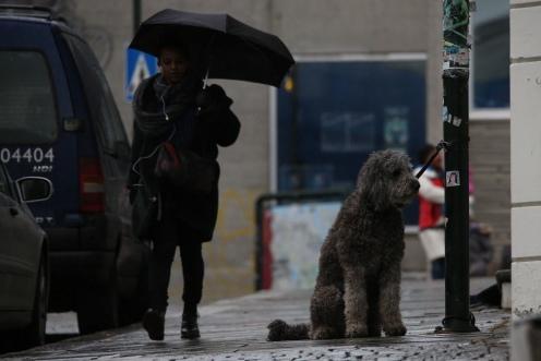 gatebilde med hund Stavanger