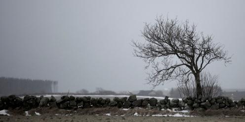 Tre, skodde og snøføyk v Hå gamle