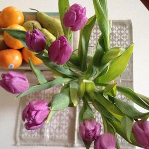 tulipanar og appelsin